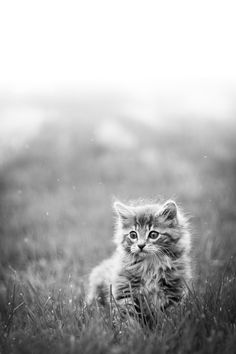 cute and fluffy kitten