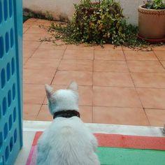Con el día que hace hoy, ni la gata quiere salir al patio. No necesitamos salir.¿Te imaginas trabajar desde la comodidad de tu hogar? Solo depende de ti, dar el paso para poder disfrutar de este estilo de vida