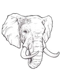 Find the desired and make your own gallery using pin. Drawn brain line drawing - pin to your gallery. Explore what was found for the drawn brain line drawing Animal Sketches, Animal Drawings, Art Sketches, Art Drawings, Realistic Drawings, Elephant Sketch, Elephant Head Drawing, Elephant Drawings, Draw An Elephant