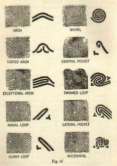 Fingerprint patterns.  #fingerprint #pattern #forensic #science
