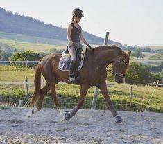 #dressge #horseriding#equestrian #horse#pferd #eden#rheinländer #wallach #fuchs #dressur#dressurpferd #dressagehorse #cheval #trab#hvpolo #eskadron #roeckl #europaspferde #_eurepferdebilder_#pst_post#staraktion @pferdinternational