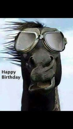 Funny Horse, Howdy all, it's a little windy! Animals And Pets, Funny Animals, Cute Animals, Happy Birthday Animals Funny, Happy Birthday Horse, Zebras, Amazing Animals, Funny Horses, Tier Fotos