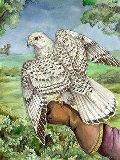 Gyrfalcon - Bird of Kings par Brenda Lyons - Falcon Lune studio