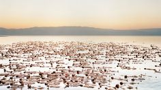 Naked Sea Installation. World-renowned contemporary artist Spencer Tunick for his first project in Israel invited hundreds of participants to take part nude in a human installation to raise awareness for the disappearing Dead Sea.