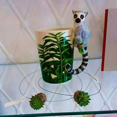 Taza lemur y colgantes Kokedama
