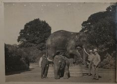 Elephants Rama and Sita with their keeper James McNally