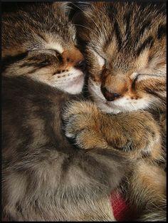 Kitten-hug by Elfster