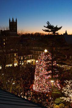 Tree lighting in Princeton!