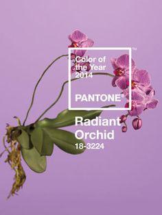 Orquídea Radiante, color de moda 2014 http://www.marie-claire.es/moda/tendencias/articulo/orquidea-radiante-color-de-moda-2014-311387273136