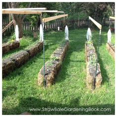 If you're looking for some interesting ideas & inspiration for your own straw bale garden, or are just curious about the possibilities, check out some of the awesome things our readers are up to with their own unique straw bale gardens... Ready to get started with your own straw bale g