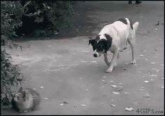 Cat vs Dog.... The battle continues...