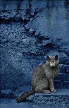 Gato solitario Pero maravilloso.