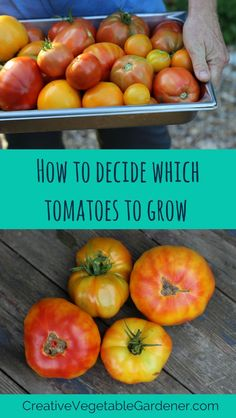 Tips for choosing between the 100's of tomato varieties out there.