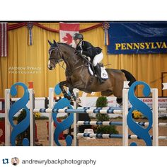 #Repost @andrewrybackphotography .  This month's Plaid Horse ARP Ad features Kama Godek - and here she is competing in the Open Jumper speed class at the Pennsylvania National Horse Show! #andrewrybackphotography #horseshowphotography #horsesofinstagram #pennsylvanianationalhorseshow #jumpers #speed #PaNHS