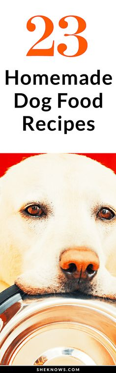 23 Homemade Dog Food Recipes Puppy Treats, Diy Dog Treats, Puppy Food, Homemade Dog Treats, Healthy Dog Treats, Cute Boxer Puppies, Doggies, Puppies Puppies, Dachshunds