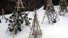 Lehká ochrana proti sněhu Ladder Decor, Winter, Outdoor, Plants, Haus, The Great Outdoors, Outdoors