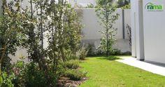 Jardin particular Torrevieja. Zona Césped