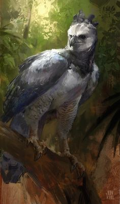 harpy eagle , Jonathan Kuo on ArtStation at…