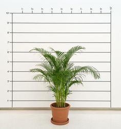 Measurement: Plant, 1969 Live plant, tape and letraset on wall Size determined by installation