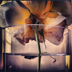 Beautiful Flowers by Nick Knight