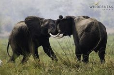 Dramatic wildlife sightings are the order of the day at Mvuu Camp #Malawi #Africa #safari