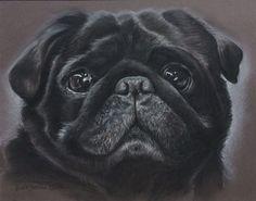 Black Pug- pastel drawing Dog Portraits