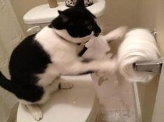 Omg!!! This is my cat!!! I hate when she does this!