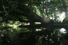 Banho das escravas em Ceará Mirim.