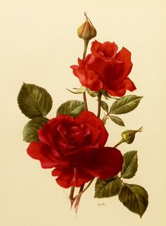I like the color of the roses and the natural look. I would like it more if the details in the flowers, stems were less precise.