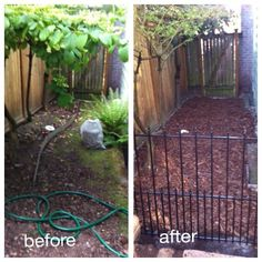 Before And After Our Shady Side Yard Turned Into A Gated Dog Run With Wood Bark Cover We Buried Stepping Stones Under Both Gates To Prevent Any Digging