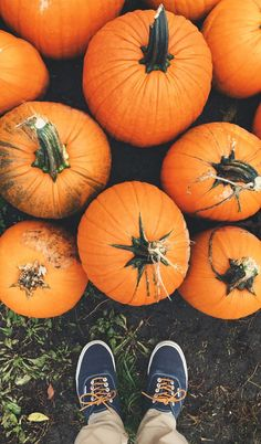 Beautiful colors and picking out your favorite pumpkins. Fall in Missouri is the perfect time to visit with your family.