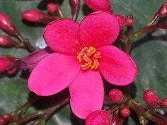Pollen in pink