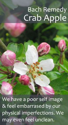 Bach Flower Remedy - Crab Apple - Also useful when we feel a bit obsessed with making the home spotless.