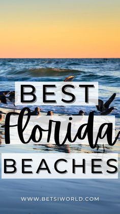 Best Florida beaches that you must visit for your next beach vacation! best florida beaches, best florida beach resorts, best florida beach towns, best florida beaches for couples, beaches in florida, beaches in florida top 10, beaches in florida beautiful, beaches in florida gulf of mexico, beaches in florida weekend getaways, beach vacation,florida vacation ideas, vacation in florida,beautiful places in florida,beach trips,vacation florida, #floridabeaches Best Beach In Florida, Places In Florida, South Beach Miami, Florida Vacation, Florida Travel, Florida Beaches, Siesta Key Beach, Jacksonville Beach, Clearwater Beach