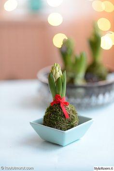 joulu,joulukukka,kukka,kukka-asetelma,hyasintti