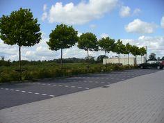 Parkeerplaatsen in de wijk, dit is voor vergunninghouders en voor bezoekers.