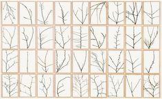 herman de vries 'die zweige der bäume', 2003
