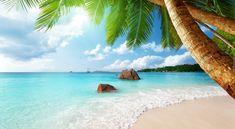 Morze, Palmy, Skały, Plaża
