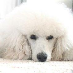 So sweet…  looks like my beautiful dog Christy!