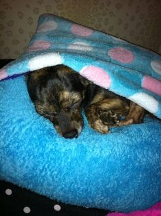 DIY Dog Bed (or Cat Bed)
