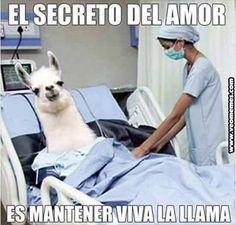 ★★★★★ Memes graciosos de personas: El secreto del amor I➨ http://www.diverint.com/memes-graciosos-personas-secreto-amor/ →  #fotosdememeschistosos #memeschistososparaelchatdefacebook #memesfraseschistosas #memesgraciososparadescargar #memessúperchistosos