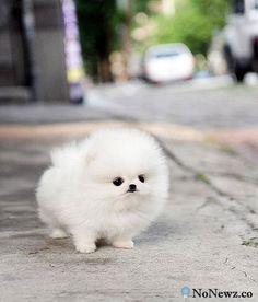 cute fluffy animals