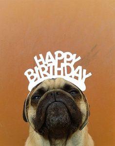 Norm Pug  Happy BIrthday #pets #animals #dogs #cute
