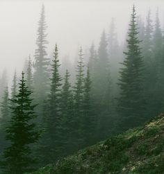 Olympic Mountains (by Trevor Ducken)                                                                                                                                                      More