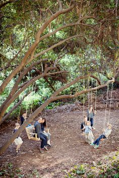 The Treehouse: Family Swing Project, I love this, a swing for everyone in the family! I wish I had a huge tree like that in my yard!