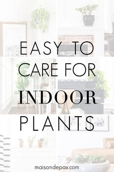 Looking for low maintenance house plants? These green house plants are easy to care for and a gorgeous design element for any space! #houseplants #indoorplants #maisondepax