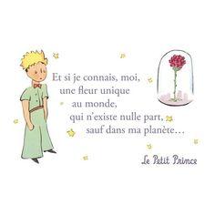 Carte postale Le Petit Prince - Une fleur unique au monde 1