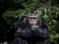 Animals may be smarter than we think – it's just hard to measure their intelligence - Business Insider