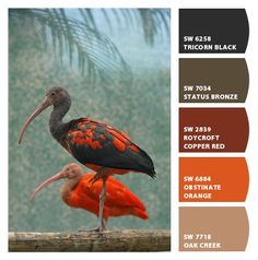 Scarlet Ibis paint colors by Sherwin-Williams