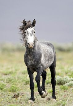 """Horses make a landscape look beautiful."" ~ Alice Walker."